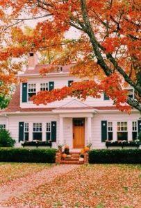 White house near a tree