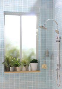 Plants in window in shower