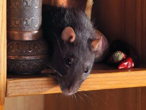 Mouse on shelf