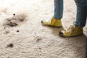 Mud on carpet