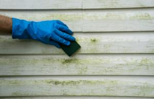 Removing algae from siding