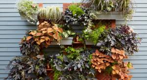 Hanging plants on siding